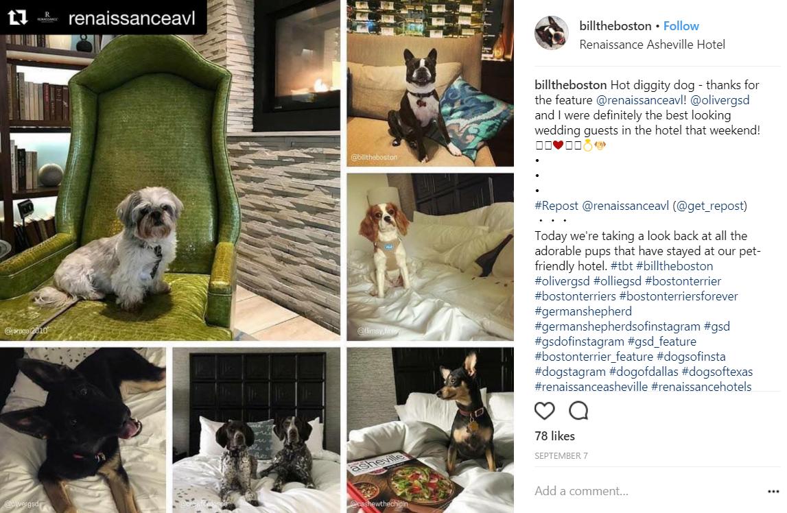 renaissance asheville regram on instagram